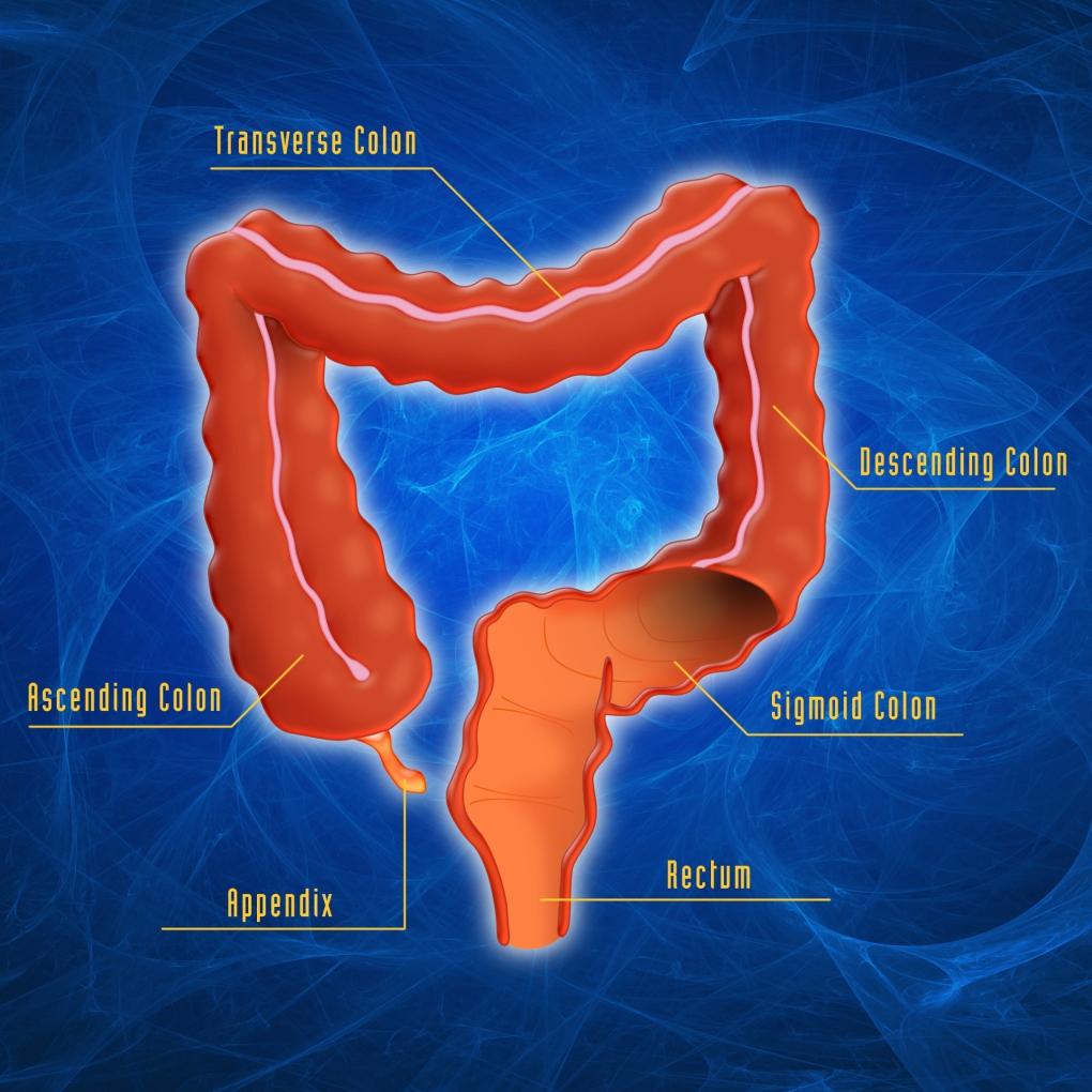 Intestinal